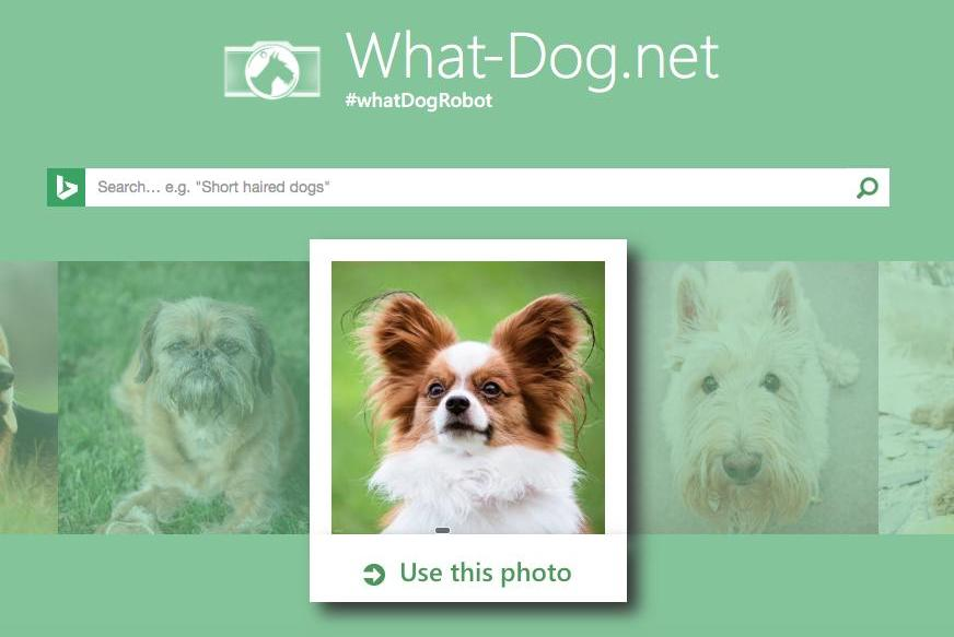 Microsoft matches human faces to dogs with What Dognet